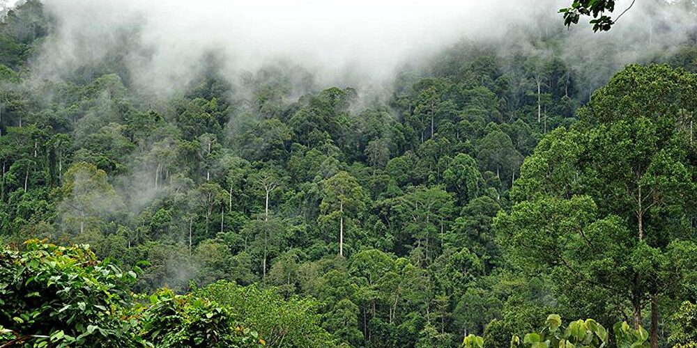 AMAZON ORMANLARININ KARBON ABSORBE ETME ORANI AZALIYOR.